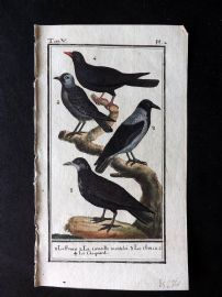 Buffon 1785 Antque Hand Colored Bird Print. Crows, Raven 5-2